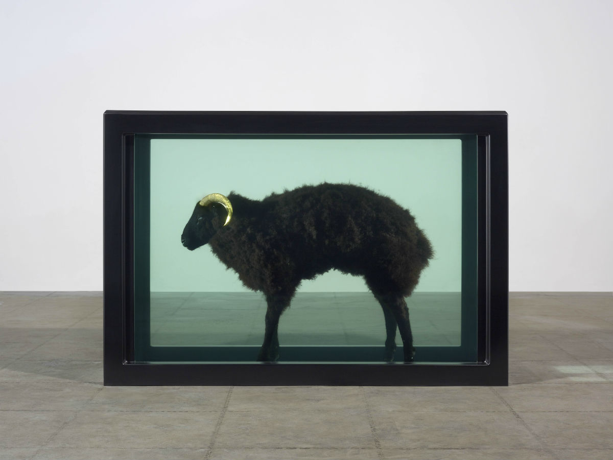 Damien Hirst, Black Sheep, 2007 cosa contemporary sacred art sacrificio